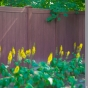 Beautiful-Rosewood-Illusions-Vinyl-Privacy-Fence_0001