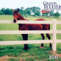 Illusions Post and Rail fences are all animal safe!