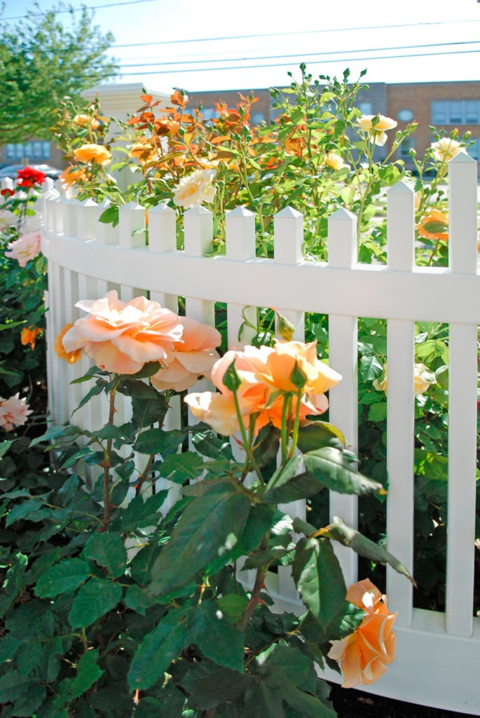 illusions pvc vinyl fence curved section with roses